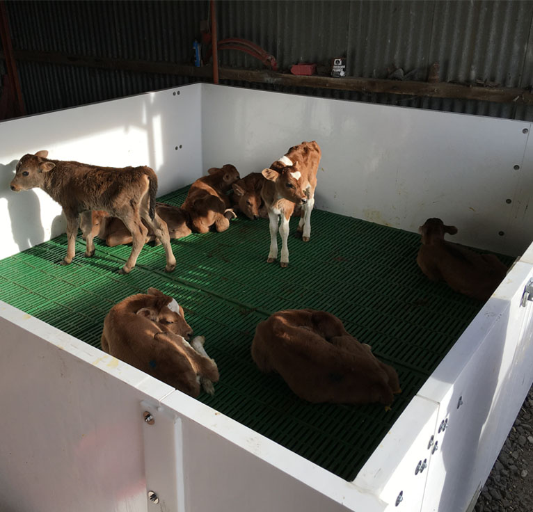 Calf Pens Nz Plastic Calf Pens Wellington Hugo Plastics